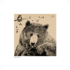 Bear of the Day_